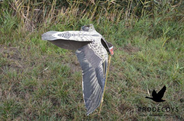 sillosocks flapper greylag goose