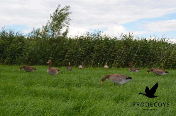 Grauwe ganzen foamies lokkers voor de jacht