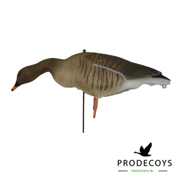 bean goose  pink footed goose decoys feeding full body