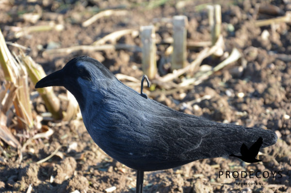 Jackdaw decoy full body flocked