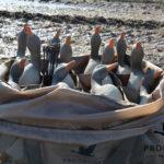 full body goose decoys 12 slot decoy bag